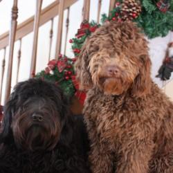 Coco & Didi (14)