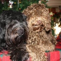 Coco & Didi (23)