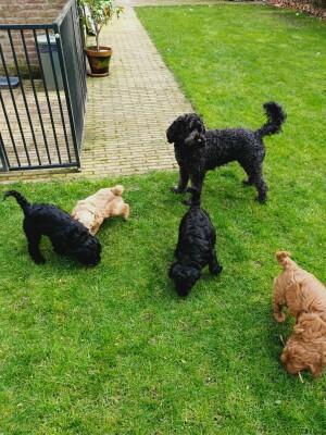Abby met pups